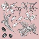 Branches et feuilles tirées par la main des arbres forestiers tempérés Ensemble floral de croquis d'isolement sur le fond blanc g Photo libre de droits