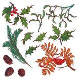 Branches et feuilles tirées par la main des arbres forestiers tempérés L'hiver a coloré l'ensemble floral d'isolement sur le fond Images libres de droits