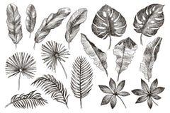 Branches et feuilles tirées par la main des plantes tropicales Ensemble floral noir d'isolement sur le fond blanc Haut détaillé Image libre de droits