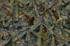 Branches et guirlande d'arbre de Noël Photographie stock