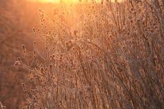 Branches et herbe d'automne au coucher du soleil Photographie stock libre de droits