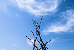 Branches et nuages photographie stock
