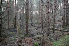 Branches et troncs Photographie stock