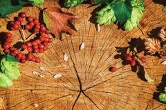 Branches et viburnum d'houblon sur le bois criqué Photographie stock