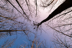 Branches extending toward the blue sky Stock Photography