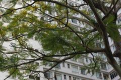 branches fönster royaltyfri bild