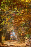 Branches of fall foliage form a tunnel, Mansfield Hollow, Connec Royalty Free Stock Photo
