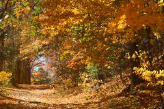 Branches of fall foliage form a tunnel, Mansfield Hollow, Connec Stock Photography