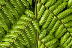 Branches of fern Stock Images