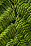 Branches of fern Stock Photos