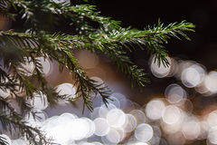 Branches of fir with bokeh. Green branches of christmas tree with round bokeh on background royalty free stock photos
