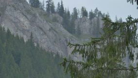 Branches of Fir and Mountains. Switching focus from a fir tree branch to the craggy mountains in the background stock footage