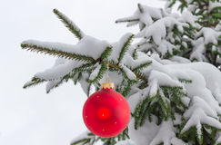 Branches of fir tree covered with snow with Christmas ornament Stock Photo