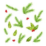 Branches of fir tree and holly leaves. For a Christmas decor. Vector illustration Royalty Free Stock Images