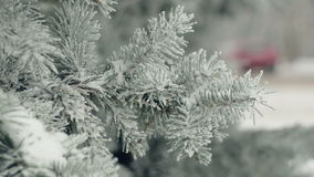 Branches of a fir-tree in snow with a people on a background. Full HD stock video footage
