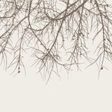Branches of a fir tree Stock Photo