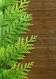 Branches of a fir-tree on woden Stock Images