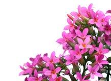 Branches fleurissantes de ressort Photographie stock libre de droits