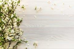 Branches fleurissantes sur le fond en bois blanc images libres de droits