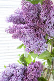 Branches of flowering purple lilac syringa. In a glass jar on light table. Beautiful spring floral background Royalty Free Stock Photography