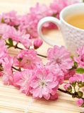 Branches of flowering Sakura Stock Images