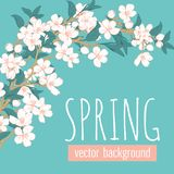 Branches with flowers on blue turquoise background and sample text Spring. Floral card template. Vector illustration. For wedding, birthday, valentine, mothers vector illustration