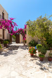 Branches of flowers pink bougainvillea bush, Crete, Greece Royalty Free Stock Images