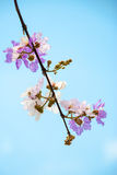Branches, flowers. Purple flowers Royalty Free Stock Photography