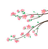 Branches with flowers Stock Photography