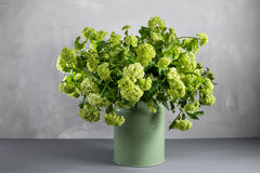 Branches of flowers viburnum berries in green bucket.  stock photos