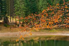 Branches with foliage on blurred background of forest lake. Tree branches with autumn foliage on blurred abstract background of forest lake in the mountains Stock Photo