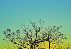 Branches silhouette background stock photos