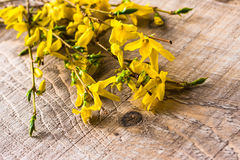Branches forsythia background spring twig flower Stock Photo