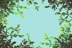 Branches frame of tree. Background Royalty Free Stock Photography