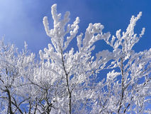 Branches with fresh fallen snow Stock Photos