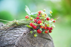Branches of fresh wild wild strawberry on old wood of a log Stock Images