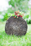 Branches of fresh wild wild strawberry on old wood of a log Stock Photos