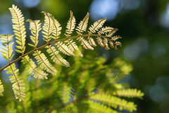 Branches of fresh young green fern leafs Royalty Free Stock Images