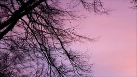 Branches in front of red sky, landscape, evening nature stock video