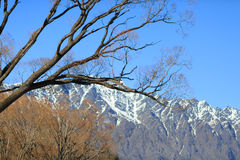 Branches in front of the Remarkables, Queenstown, New Zealand Royalty Free Stock Photo