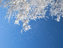 Branches in frost Royalty Free Stock Photo