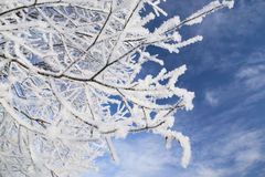 Branches in frost stock image