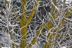 branches frostigt Arkivfoton