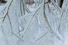Branches frozen in the winter. Stock Photo