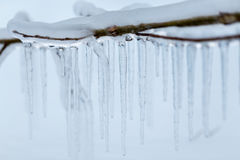 Branches frozen in the winter. Royalty Free Stock Photos