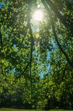 Branches full of green leaves on a forest in a sunny day. At the highlands of Serra da Estrela. The highest mountain range in continental Portugal, with stock image