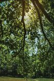 Branches full of green leaves on a forest in a sunny day. At the highlands of Serra da Estrela. The highest mountain range in continental Portugal, with royalty free stock photos