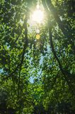 Branches full of green leaves on a forest in a sunny day. At the highlands of Serra da Estrela. The highest mountain range in continental Portugal, with royalty free stock photography