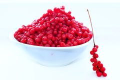 Branches and full plate of red ripe schisandra. Branch of red ripe schisandra on the white stock photo