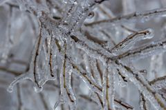 Branches fully encapsulated in ice Royalty Free Stock Photo